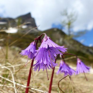 flower-1444550_640