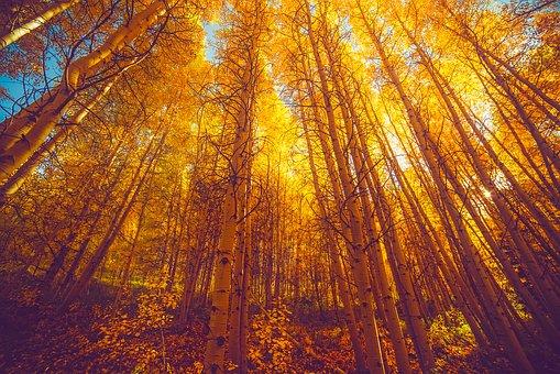 autumn-1950876__340